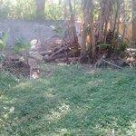 Terreno a Venda no Jardim Castelinho